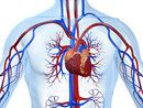 Nutritional Arterial Self-Cleansing | Cardiovascular System